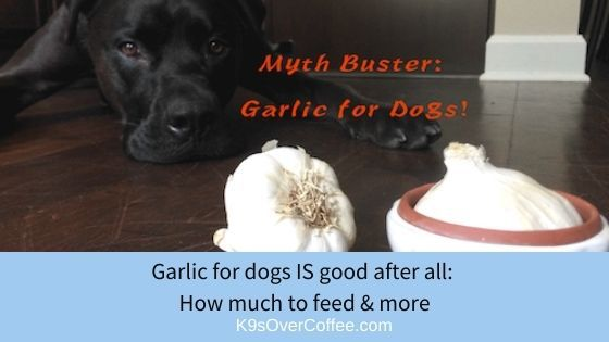 K9sOverCoffee | Garlic for dogs IS good after all/ How much to feed & more
