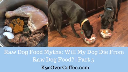 K9sOverCoffee | Raw Dog Food Myths: Will My Dog Die From Raw Dog Food? | Part 5
