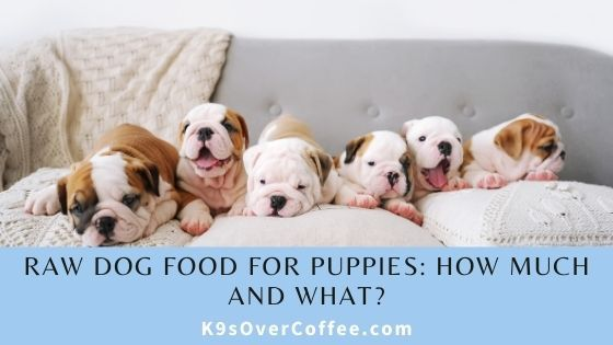 K9sOverCoffee | Raw Dog Food for Puppies: How Much and What?