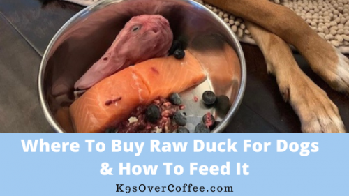 K9sOverCoffee | Where to buy raw duck for dogs & how to feed it