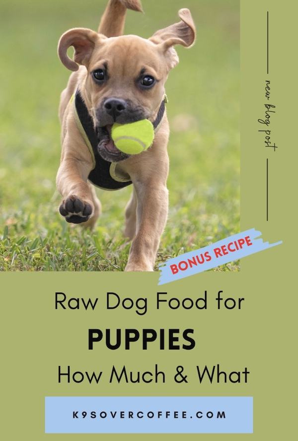 K9sOverCoffee.com | Raw Dog Food for Puppies - How much and what plus recipe