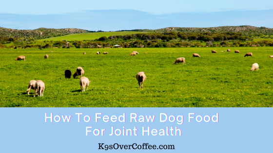 K9sOverCoffee | How to feed raw dog food for joint health