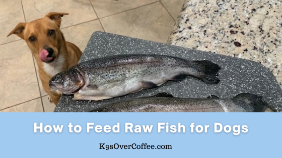 K9sOverCoffee | How to feed raw fish for dogs