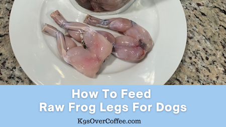 K9sOverCoffee.com | How to feed raw frog legs for dogs
